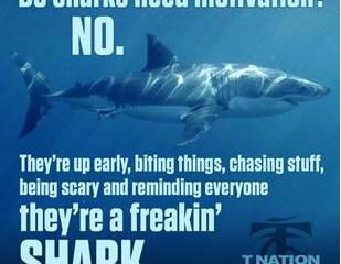 Monday Motivation - Be a freakin' shark!