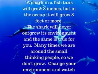 Monday Motivation - Adapt like a freaking shark!