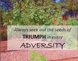Monday Motivation - The sunflower & sowing seeds of triumph