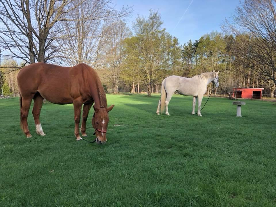 Horses in grassy pasture