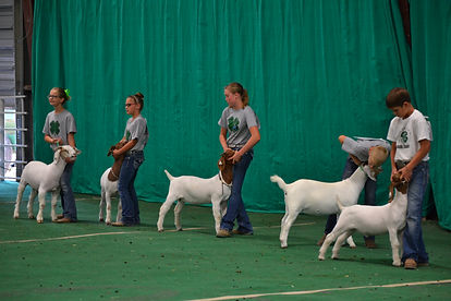 lincoln county fair, 2020 fair, lincoln county ag society, north platte, nebraska, goat, sheep, 4H, university of lincoln extension, ffa