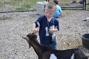 lincoln county fairgrounds, ag society, north platte, ne, nebraska, dusty trails, petting zoo, kid petting goat