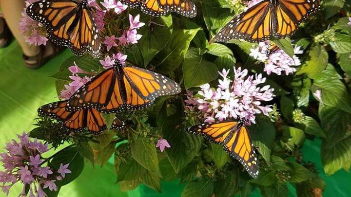 Butterfly Encounters Planetarium