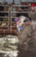 Lincoln County Fair Nebraska Slig Pig Wrestling Bentonite greased pig