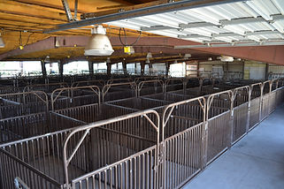 Beef Barn_Stall Area 6.JPG