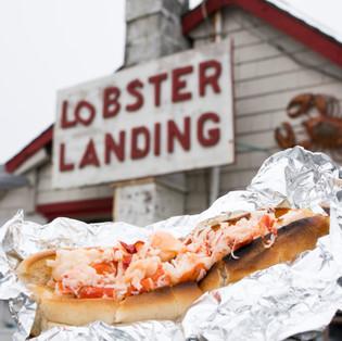 20190620_lobster_0025.jpg
