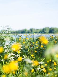 HKH_Schwedische_Sommerwiese_am_See.jpg