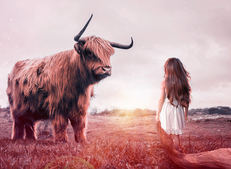 NEW MOON IN TAURUS | Stilling the Pasture Within