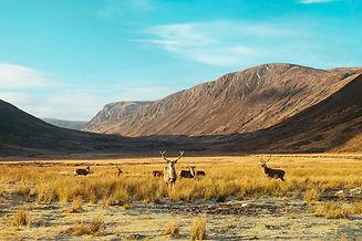 The Scottish Highlands 6.jpg