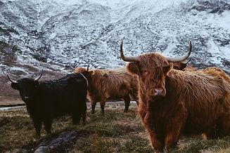 The Scottish Highlands 5.jpg