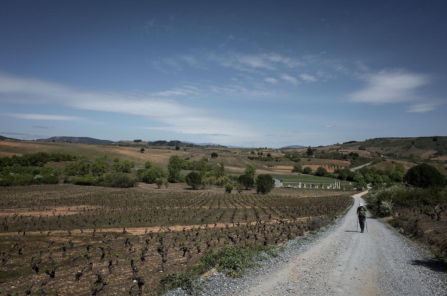 A pilgrim walking through the vineyards in the Bierzo wine region.