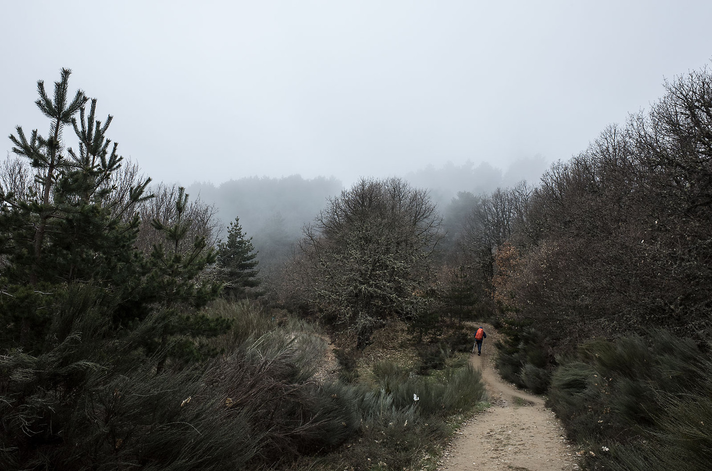 A pilgrim walks the Way through a foggy pine forests.