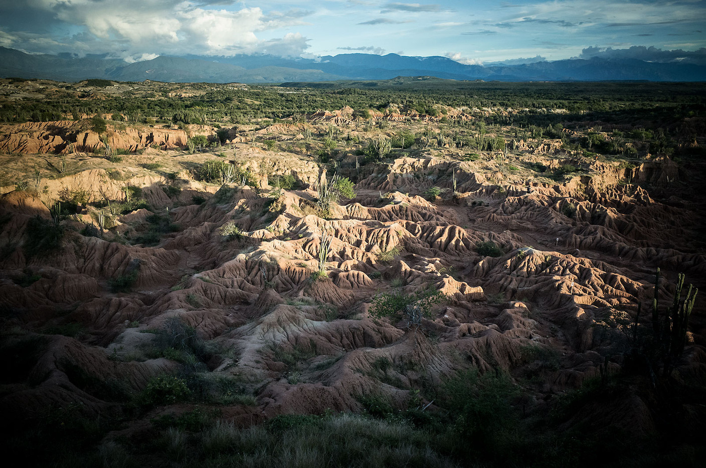 Afternoon sunlight rakes across the surface of spore-like formations that spread across the Tatacoa Desert in southern Colombia.