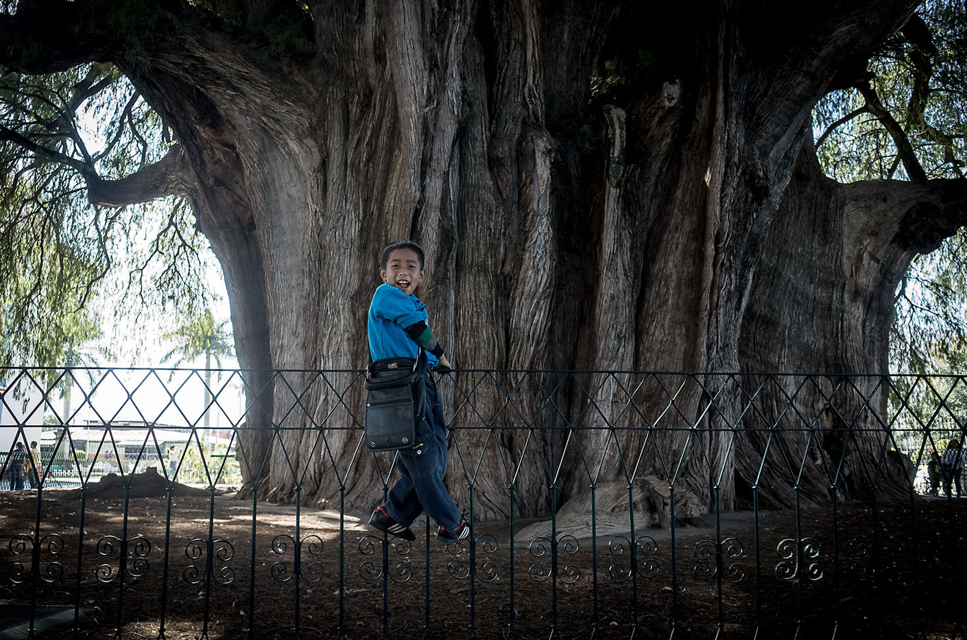 """Julio is a child guide at the Árbol del Tule in Oaxaca. The Montezuma cypress tree is the widest in the world with a trunk diameter of 14m and circumference of 45m. Guides like Julio use handheld mirrors to reflect sunlight at specific features of the tree that resemble familiar objects like """"la cuna"""" (the cribe), """"la cara de la bruja"""" (the witch's face), and """"las patas de jirafa"""" (the giraffe's legs)."""