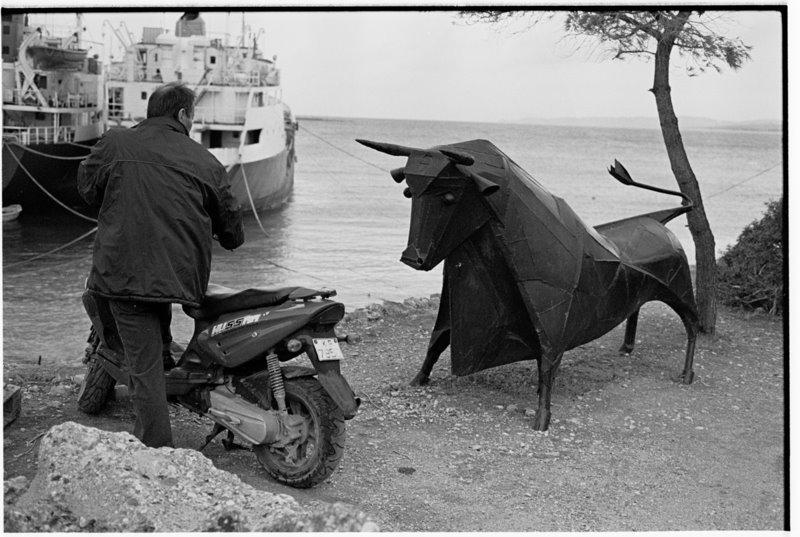 Greek Bull - by David Peat