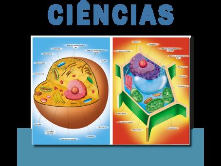Confecções - Ciências