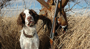 pheasant hunting property for sale