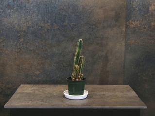 サボテン【フロリダカクタス】|SOWAKAの植物