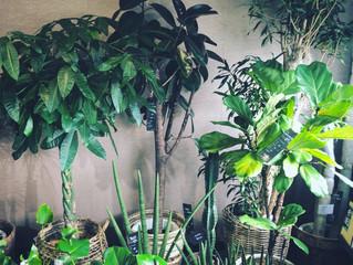 SOWAKAの観葉植物