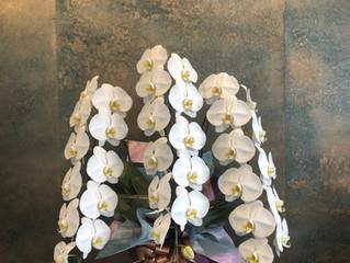お盆用の花束、アレンジ、胡蝶蘭オーダー受付中です