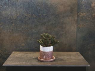 サボテン|SOWAKAの植物