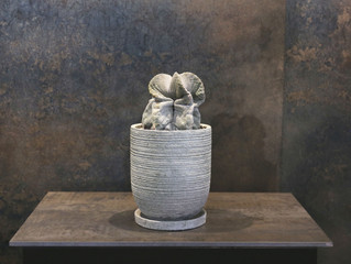 白鸞鳳玉・ストロンギ SOWAKAの植物