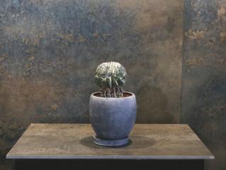ホリダ|SOWAKAの植物