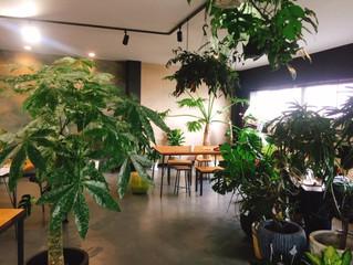 SOWAKAオフィスグリーン