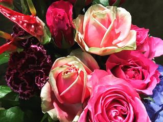 トルネード 薔薇はピタハヤ