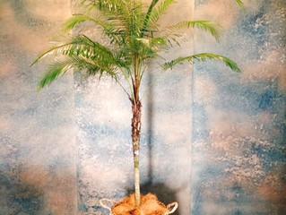 観葉植物のご紹介