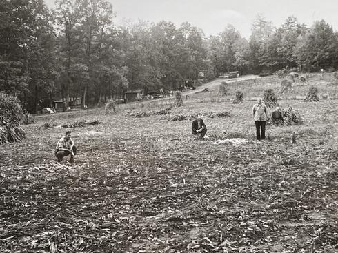 Mission Farm, Camp Ara, farming