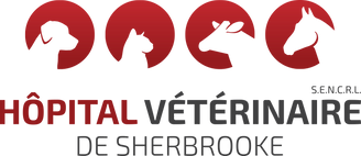 logo-Vet-fondpale.png