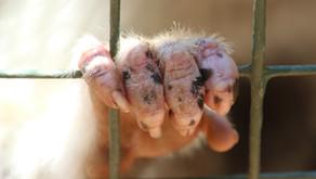 Non tutti gli animali sono domestici: dalle gif al bracconaggio di specie a rischio