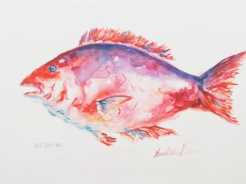 """Red Snapper"" - 10 x 14"