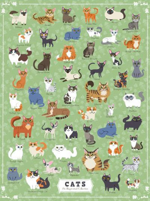 Cats of America Puzzle - 500 pcs
