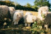 190725_R_Goats-2369.jpg