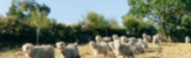 190725_R_Goats-2133.jpg