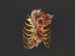 Lung - Vancouver Sleep Clinic - PANDAGUN