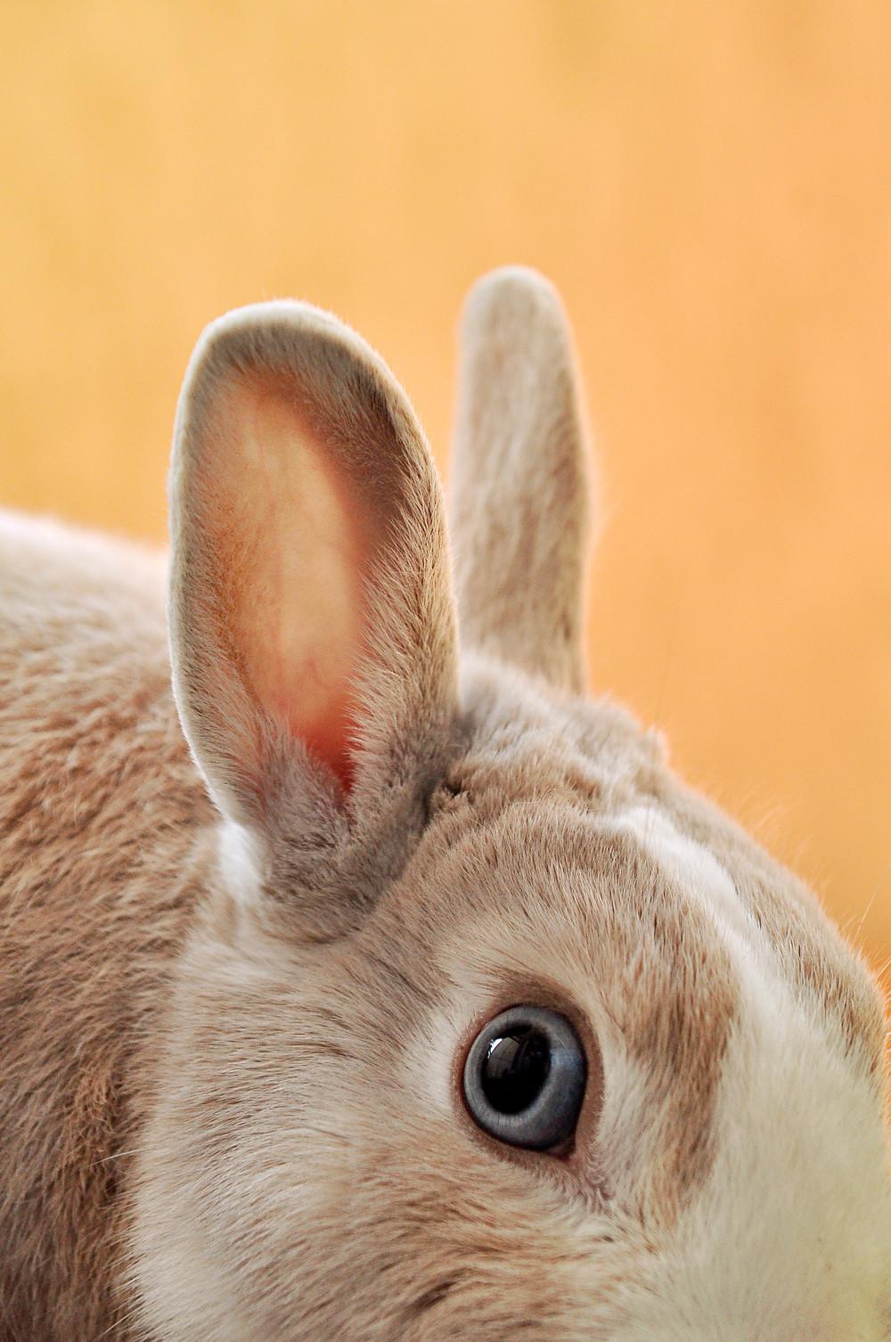 Image: bunny ears