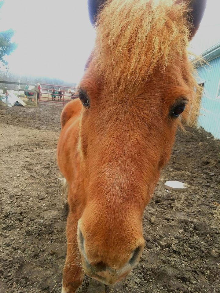 Cupcake, the pony