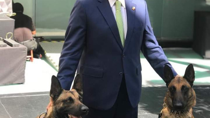Senado propone desarrollar campañas de cuidado para mascotas y animales de compañía