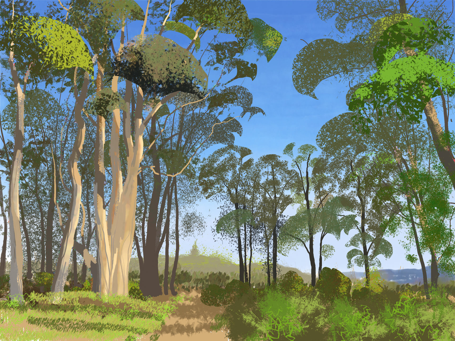 Eucaliptus trees