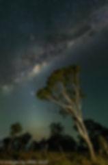 Leaning tree final wm.jpg