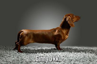 ginny2.jpg
