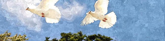 lacher de colombes pour un mariage a Annecy