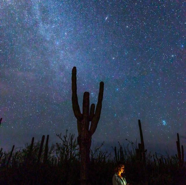 Cactus La Paz