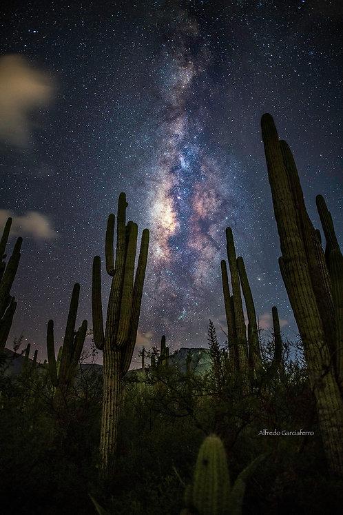 Taller Tehuacán: Reserva de la Biósfera con Vía Láctea