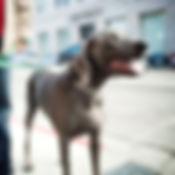 Metro Pup SA Dog Walking San Antonio