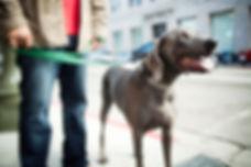 All Breed Care - Dog Walkig