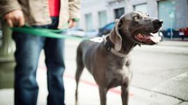 Walking Your Dog Raises Money for Rescue
